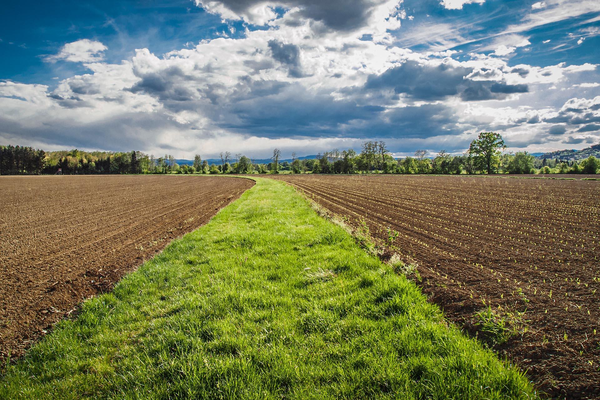 Agrarfläche