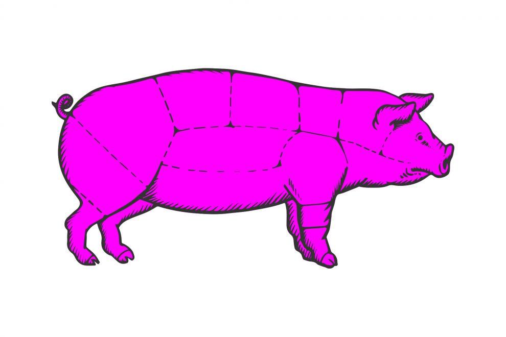 Illustration Schwein