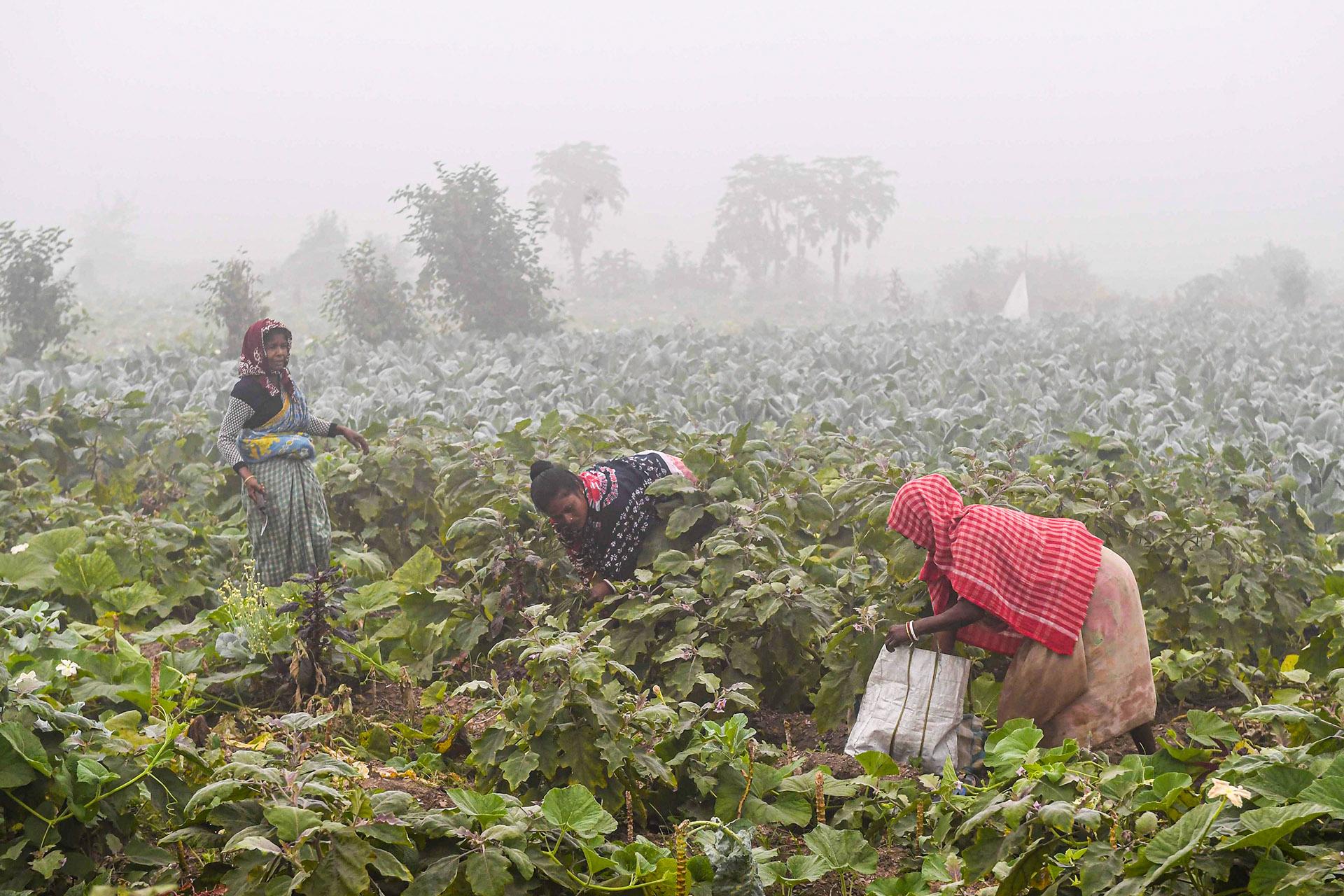 Die Hälfte der Bevölkerung Indiens – damit etwa 700 Millionen Menschen – arbeitet in der Landwirtschaft.