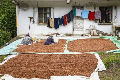 Die Lieferketten von Ferroros Nutella beginnen oft in der Türkei.